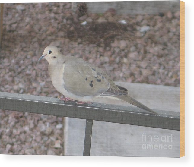 Photography Wood Print featuring the photograph Dove by Theresa Davis