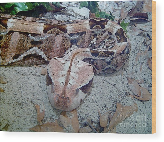Snakes Wood Print featuring the photograph Hissssss by Heather Morris