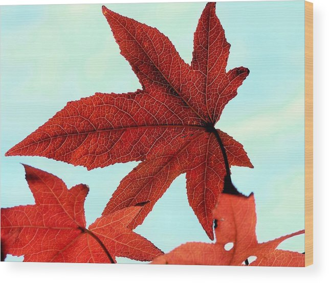 Autumn Wood Print featuring the photograph I'm Ready For My Closeup by Janice Drew