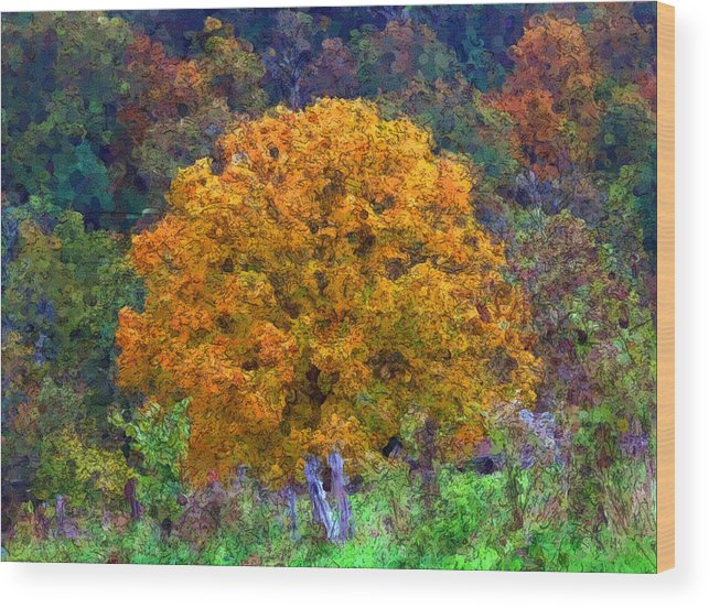 Autumn Wood Print featuring the digital art Oak In Autumn Color by George Ferrell