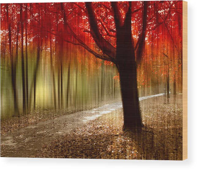 Autumn Wood Print featuring the photograph Painted With Light by Jessica Jenney