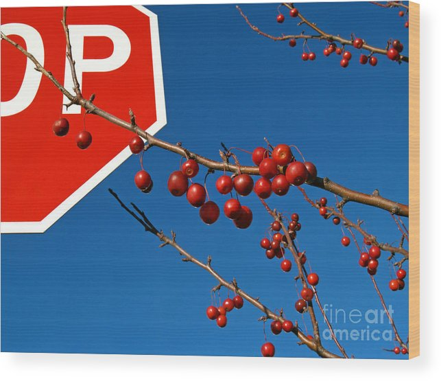 Rebellion Wood Print featuring the photograph Rebellious Ornamental Crabapples In Autumn by Anna Lisa Yoder