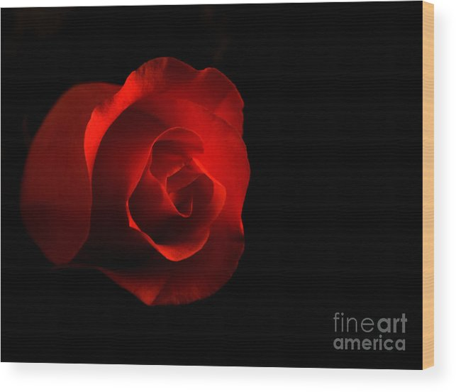 Rose Wood Print featuring the photograph Simply A Rose by Robin Lynne Schwind