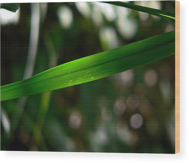 Green Wood Print featuring the photograph The Green Blade by Thomas Michael Conner