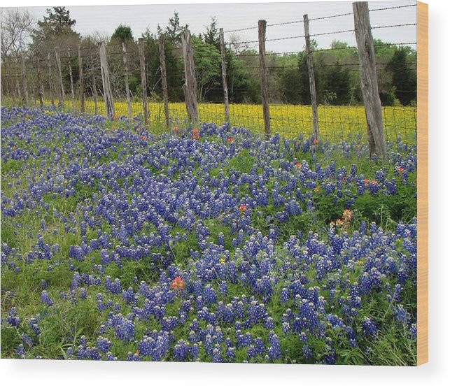 Bluebonnets Wood Print featuring the photograph Bluebonnets Of Texas by Jan Patterson