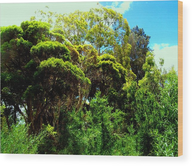 Landscape Wood Print featuring the photograph Australian Summer by David Reese
