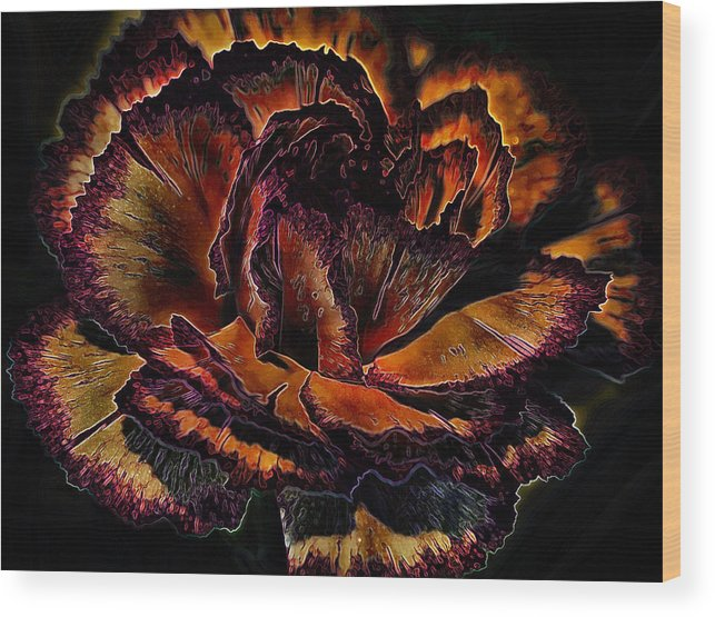 Petals Wood Print featuring the photograph Carinated Curves by Bill Tiepelman