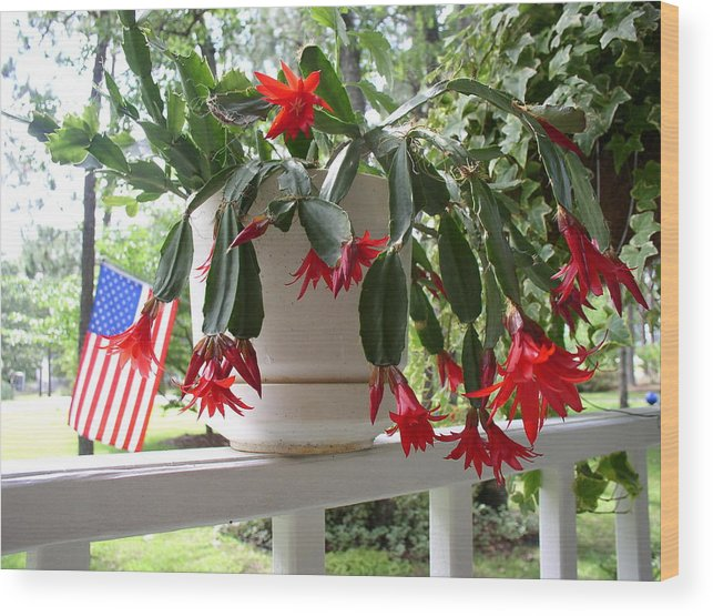 Red July Cactus Wood Print featuring the photograph July Cactus With Old Glory by Peggy Wilburn
