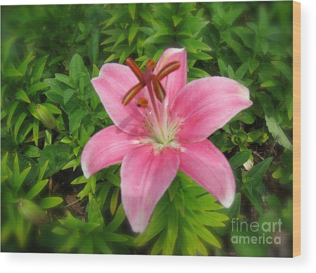 Lily Wood Print featuring the photograph Pink Lily by Nancy Patterson