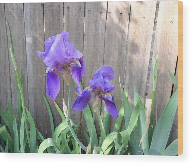 Flower Wood Print featuring the photograph Purple Iris by Peggy Wilburn