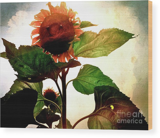 Sunflower Wood Print featuring the photograph The Business Of Bees by Kevyn Bashore