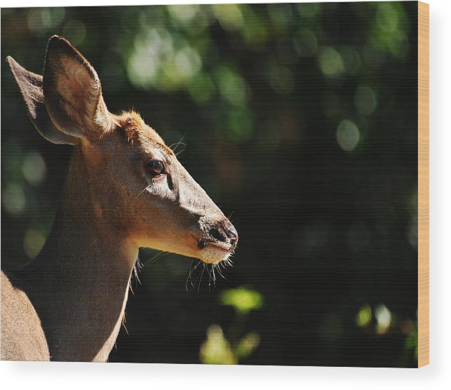 Deer Wood Print featuring the photograph Sunshine Daydream by Lori Tambakis
