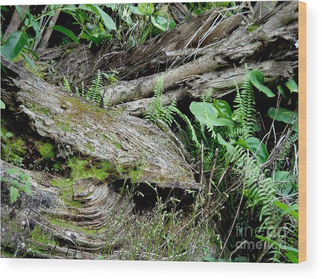 Tree Wood Print featuring the photograph Tree Trunk And Ferns by Ruth Kongaika