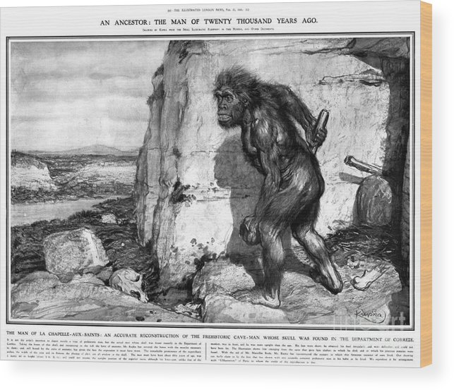 1909 Wood Print featuring the photograph Neanderthal Man by Granger