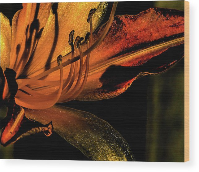 Abstract Flower With Gold And Red Wood Print featuring the photograph Abstract Flower Golden Red by Mar Nie