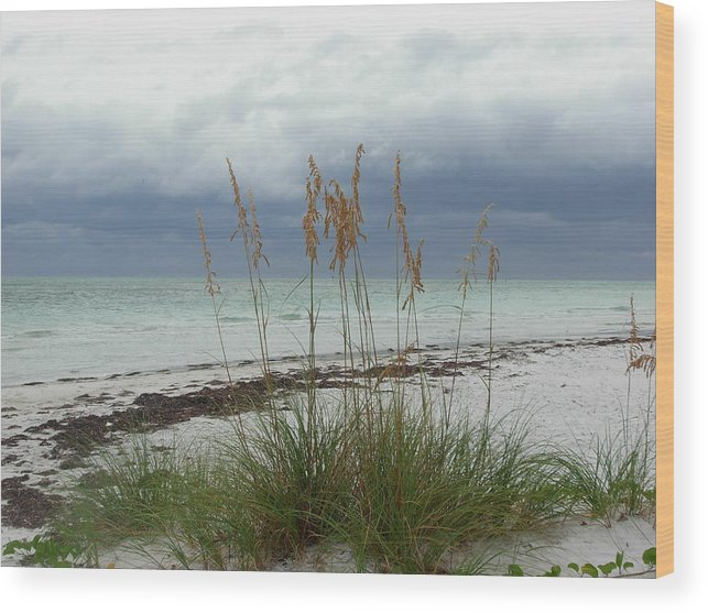 Photography Wood Print featuring the photograph Anna Maria Island by Amanda Vouglas