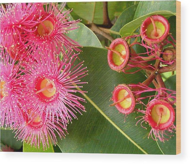 Flowers Wood Print featuring the photograph Australian Flora2 by Evguenia Men