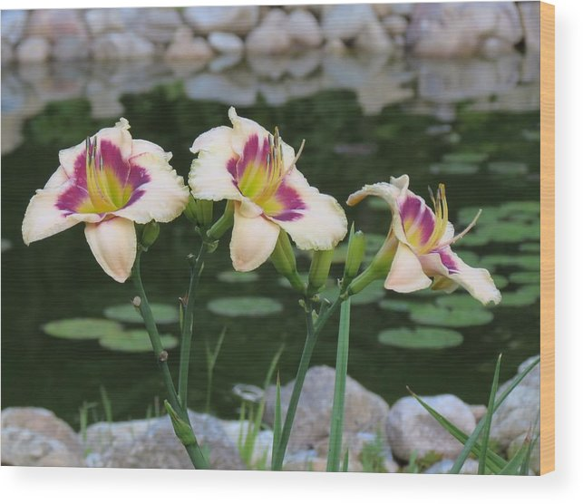 Daylily Wood Print featuring the photograph Blooming By The Pond by MTBobbins Photography