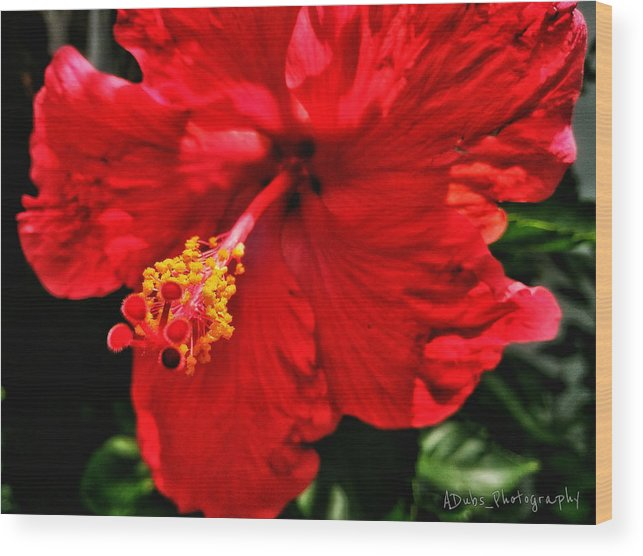 Flower Wood Print featuring the photograph Blooming Flower 2 by Allen Williamson