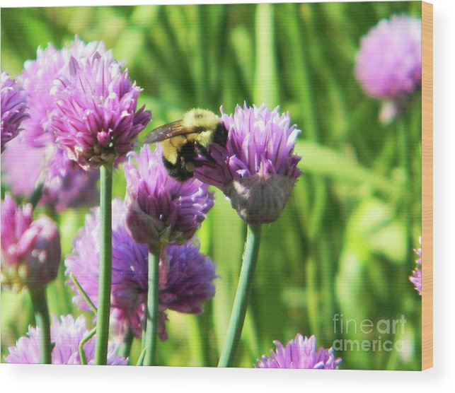Bee Wood Print featuring the photograph Bumble Bee And Chives by Emily Michaud