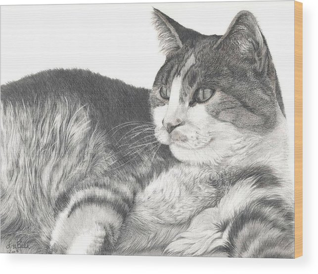 Cats Wood Print featuring the drawing Chance by Lisa Bell