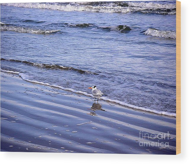 Nature Wood Print featuring the photograph Creatures Of The Gulf - Seaing And Wading by Lucyna A M Green