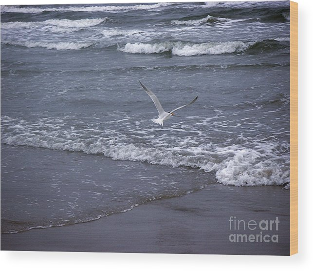 Nature Wood Print featuring the photograph Creatures Of The Gulf - Tranquility by Lucyna A M Green