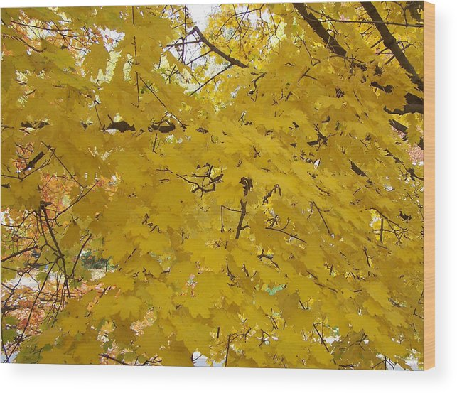 Fall Autum Trees Maple Yellow Wood Print featuring the photograph Golden Canopy by Karin Dawn Kelshall- Best