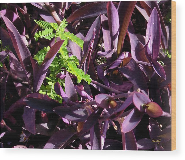 Carribean Plant Wood Print featuring the photograph Green Spot by Kurt Gustafson