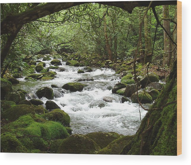 Smoky Mountains Wood Print featuring the photograph Greenbrier River Scene 2 by Nancy Mueller