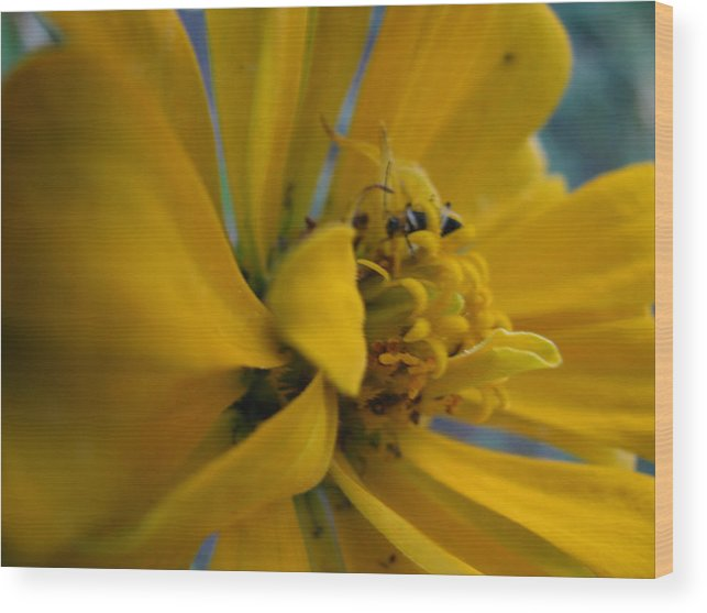 Flowers Wood Print featuring the photograph Hiding Place by Gloria Byler