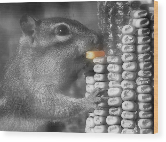 Chipmunk Wood Print featuring the photograph Just One More Bite by Kenneth Krolikowski