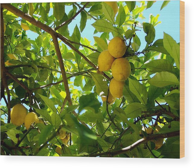 Lemons Wood Print featuring the photograph Lemon Tree by Christopher Rowlands