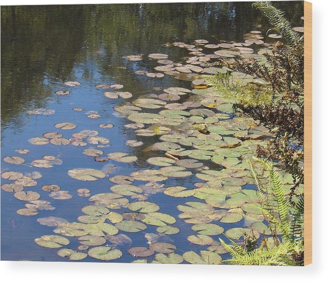 Lily Pads Wood Print featuring the photograph Lily Pads by Denise Lowery