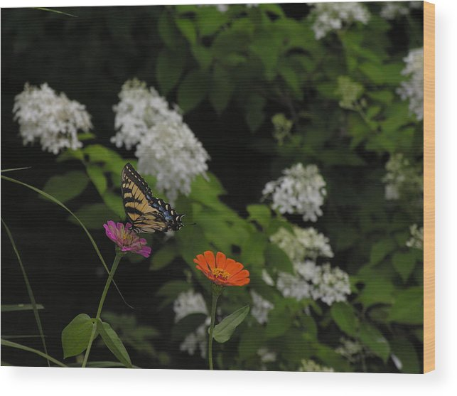 Butterfly Wood Print featuring the photograph Lingering by Anna Dubon