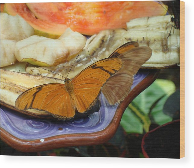 Butterfly Wood Print featuring the photograph Lunch Time by Robyn Leakey