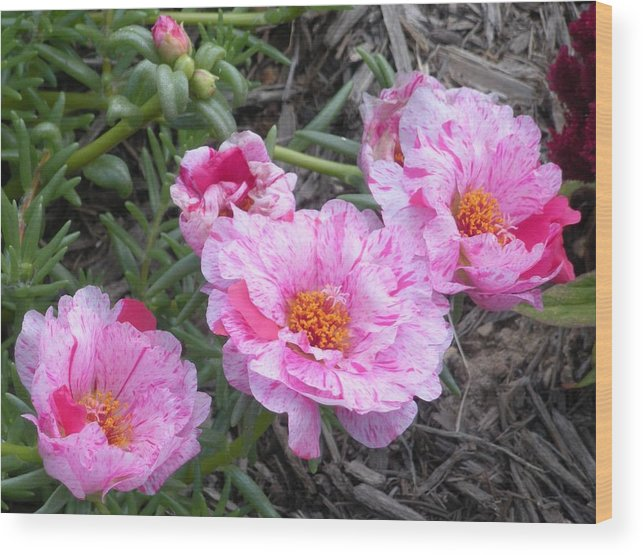 Pink Flowers Wood Print featuring the photograph My Favorite Flower by Jeanette Oberholtzer