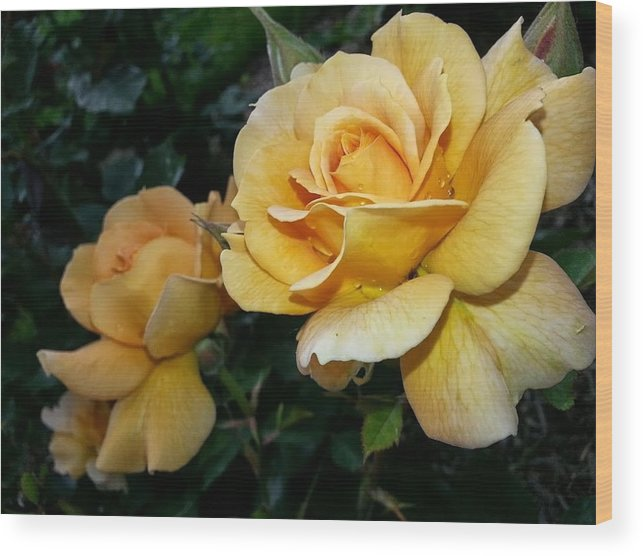 Nature Wood Print featuring the photograph My Yellow Rose by Timothy Porter