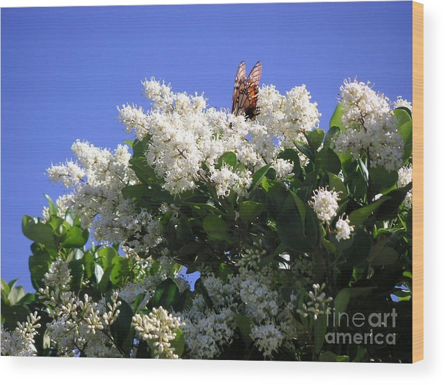 Nature Wood Print featuring the photograph Nature In The Wild - Bathing In Blooms by Lucyna A M Green