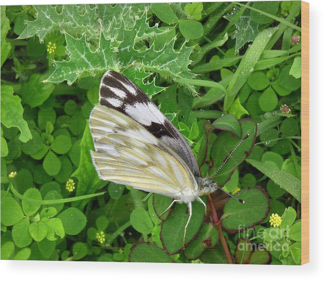 Nature Wood Print featuring the photograph Nature In The Wild - Visiting With The Greens by Lucyna A M Green