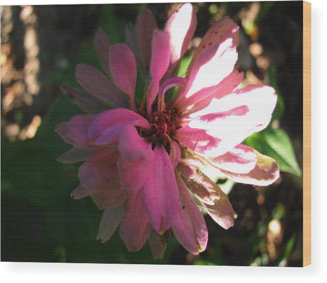 Flower Wood Print featuring the photograph Nature Sparkles by Gloria Byler