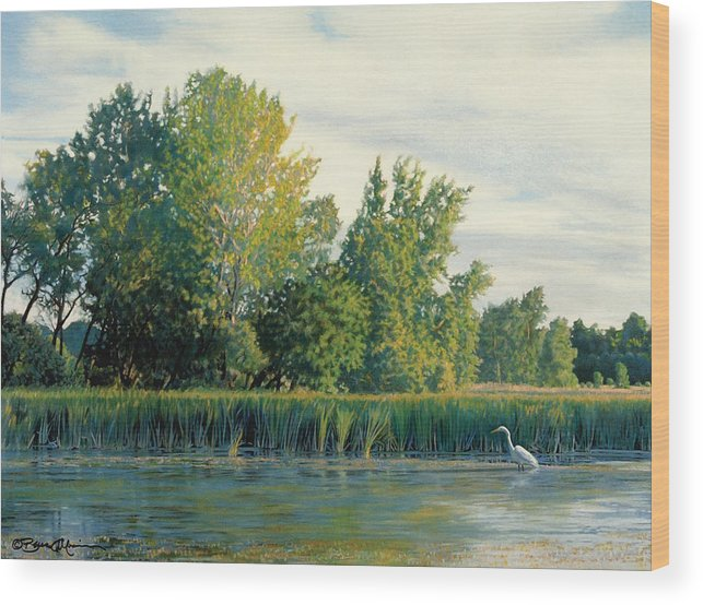 Great Egret Wood Print featuring the drawing North Of The Grade-great Egret by Bruce Morrison