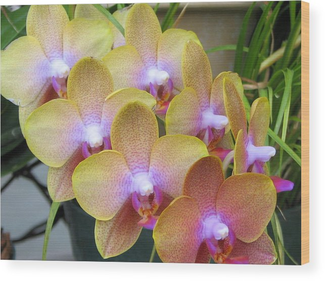 Orchid Wood Print featuring the photograph Orchid 7 by David Dunham