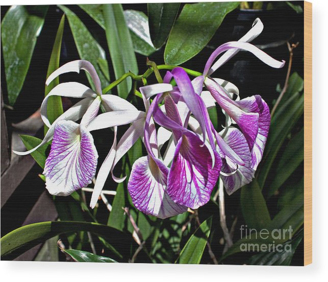 Floral Wood Print featuring the photograph Orchid Cluster by Robert Sander