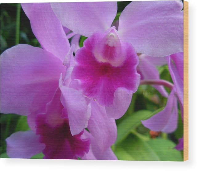 Orchids Wood Print featuring the photograph Orchid Deep by Amanda Vouglas