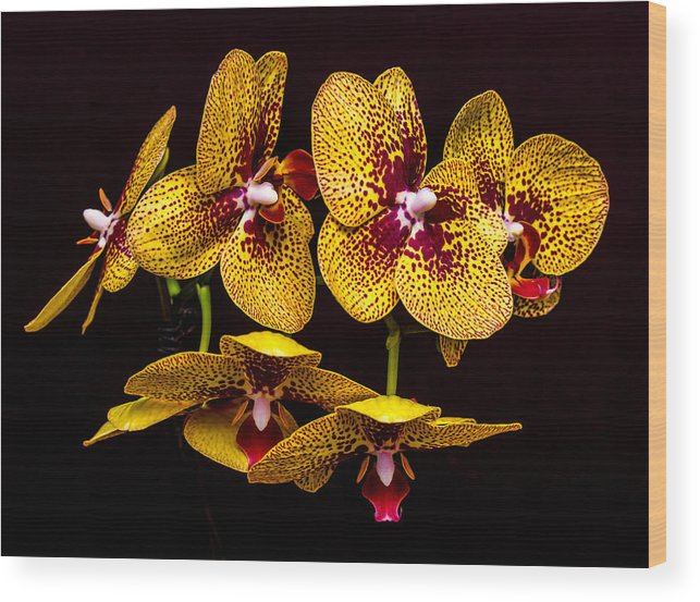 Orchid Wood Print featuring the photograph Orchid In Space by Travis Boyd