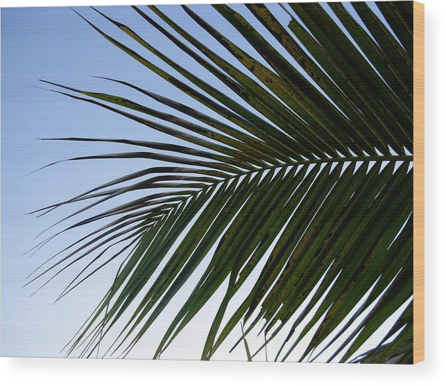 Palm Tree Wood Print featuring the photograph Palms To The Sky by Amanda Vouglas