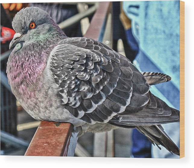 Pigeon Wood Print featuring the photograph Pigeon by Linda Pulvermacher