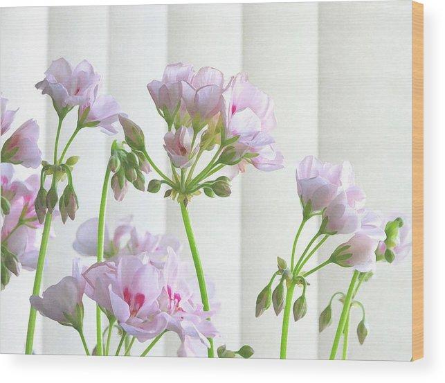 Flower Wood Print featuring the photograph Pink Geranium by Jim Darnall