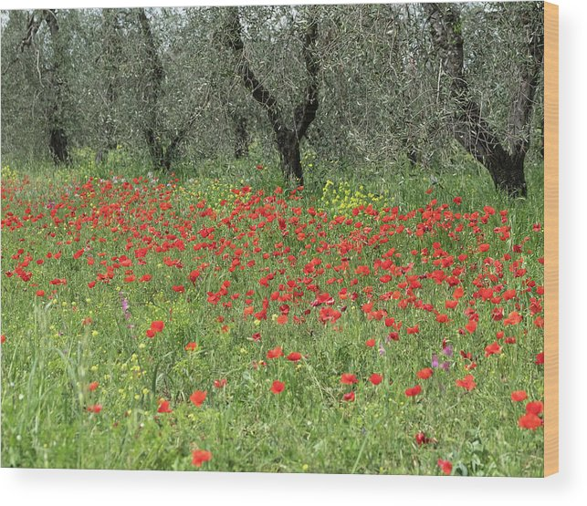 2018 Wood Print featuring the photograph Poppies And Olives by Jenni Alexander